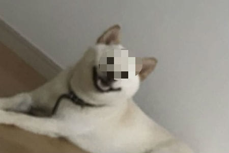 【悲報】イヌさん、とんでもなくエッチな瞬間を目撃してしまうwwwww